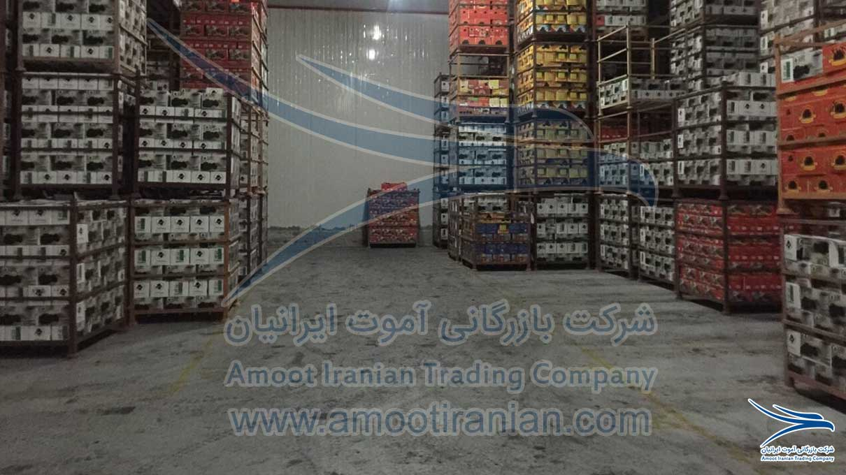 International Supplier of Date Palm, International Seller of Date Palm, International Date Supplier, International Date Seller, Date Supplier, Date Seller